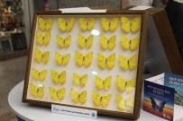 KOBRA YILANI - Kelebek Sergisine Yoğun İlgi
