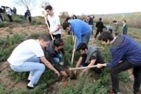 AYDOS ORMANI - Öğrenciler Yeşil Bir Doğa İçin Fidanları Toprakla Buluşturdu