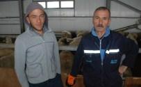 SEHER VAKTI - Aradığı Çobanı Gürcistan'da Buldu