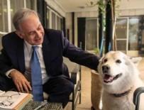 BENYAMİN NETANYAHU - Netanyahu'nun köpeği Kaiya konuklara saldırdı