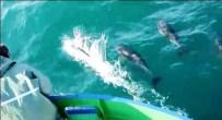 YUNUS BALIKLARI - Yunuslar Balıkçı Teknesi İle Yarıştı