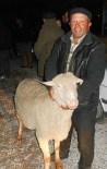 Afyonkarahisar'da Çiftçilere Damızlık Koç Dağıtıldı