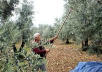 OVAAKÇA - Osmangazi'den Zeytin Yağı Üreticisine Destek
