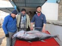 ORKİNOS - Hisarcık'ta 100 Kiloluk Orkinos Balığı İlgi Odağı
