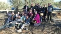 ÜMİT AKTAŞ - Canan Karatay Gömeç'te Zeytin Hasat Şenliğine Katıldı