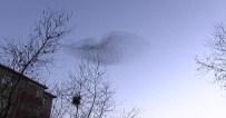 SIĞIRCIK - İstanbul Semalarında Sığırcık Kuşlarından Büyüleyen Görsel Şov