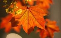 ÖMER COŞKUN - Kireçlenmeden Çınar Yaprağı İle Kurtulun