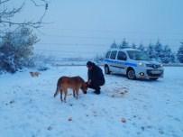 Zabıta Ekipleri Sokak Hayvanlarını Unutmadı