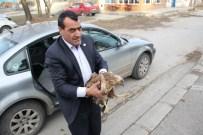 Erzincan'da Yolda Yaralı Bulunan Kartal Koruma Altına Alındı