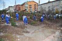 Çamlık Mahallesi'ne Bin Adet Çam Ağacı Dikildi
