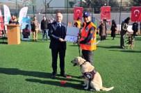 MEHMET BAYRAM - Ankara İtfaiyesi'nin Şampiyon K-9 Köpekleri