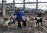 Fabrikasında 120 Köpeğe Bakıyor