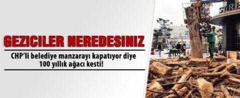 CHP'li Şişli Belediyesi'ndan ağaç katliamı