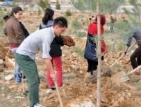 Avrupa'dan Türkiye'ye ağaçlandırma övgüsü