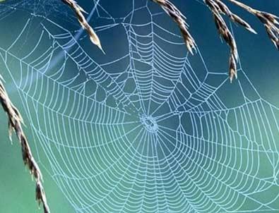 İlaç niyetine örümcek zehri