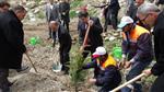 MEHMET ALİ ÇELİK - Konya'da 75 Bin Fidan Dikildi