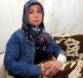 HAYVAN BAKICISI - Barınakta Köpek Saldırısı: 2 Yaralı