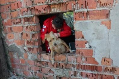 Akut'tan Kuyuya Düşen Köpeğe Yardım Eli
