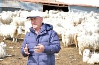 Ankaralı Koyun Keçi Yetiştiricilerinden Hıdırellez Kampanyası