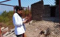 Kurucaşile'de Sokak Köpekleri Kısırlaştırıldı