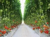 SANCAKLI İĞDECİK - Manisa Çiftçisi Büyükşehir Belediyesi İle Kalkınıyor