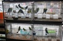 PET SHOP - Tekirdağ'da Evcil Hayvanlara İlgi Arttı