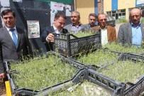 HÜRRIYET ŞAHIN - Hüyük'te Lavanta Bitkisi Üretimi Başlıyor