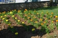 Gömeç'te Parklar Çiçeklere Bürünüyor