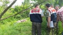 İBRAHIM ÇIÇEK - Sakarya'da Bahçede Erkek Cesedi Bulundu