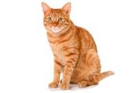 ŞIZOFRENI - Kedi Beslemek Şizofreni Yapabilir