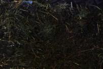GESI BAĞLARı - Solucanlarla Vermikompost Gübre Üretimi
