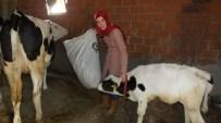 İvrindili Elif Hanım, 'Önder Çiftçi' Oldu