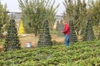 HÜRRIYET ŞAHIN - Hüyüklü Çiftçinin Asgari Ücreti Organik Çilekten