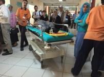 ERENYURT - Fatsa'da Ağaçtan Düşme Vakaları Açıklaması 3 Yaralı
