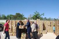 Karaman'da Sebze Kurutma Projesi Kapsamında 160 Bin Fide Dağıtıldı