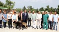 SAĞLIK KARNESİ - Sokak Köpeklerine Mikroçipli Takip