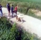 KÖPEK DÖVÜŞÜ - Denizli'de Köpek Dövüştürenlere 15 Bin Lira Ceza