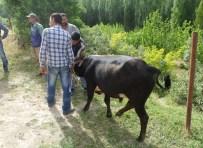 Mardin'de Büyükbaş Hayvan Hırsızlığı