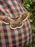 Kelebeğin Kanatlarındaki İnsan Figürü İlgi Çekti