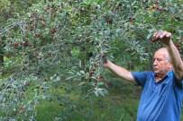 Çiftçinin Umudu 'Küçük Kırmızı İkizler'