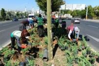BALGAT - Ankara Dört Mevsim Çiçek Açıyor