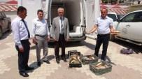 BALIK AĞI - Yozgat'ta Kural Dışı Yakalanan 400 Kilo Balığa El Konuldu