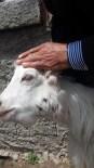 'Sürüden Ayrılan Koyunları Kurt Kaptı'