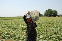 GÜN DOĞMADAN - Yakıcı Güneşin Altında 'Kadınların Ekmek Kavgası'