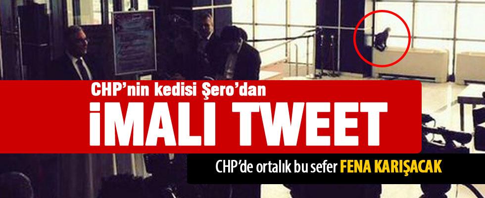 CHP'nin kedisi Şero'dan imalı Baykal tweeti