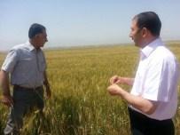 KONUKBEKLER - Çolakoğlu, Buğday Tarlalarını İnceledi