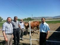 KONUKBEKLER - Muş'ta Buğday Ve Çiftlikler İncelendi