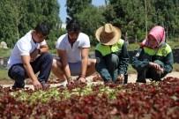 HALI DESENİ - Toprağa 'Çiçeklerden Kilim' Yaptılar