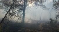 Bilecik İnhisar'da Orman Yangını