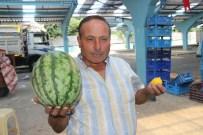 HÜSEYIN KALAYCı - 5 Kilo Karpuz Fiyatına 1 Limon